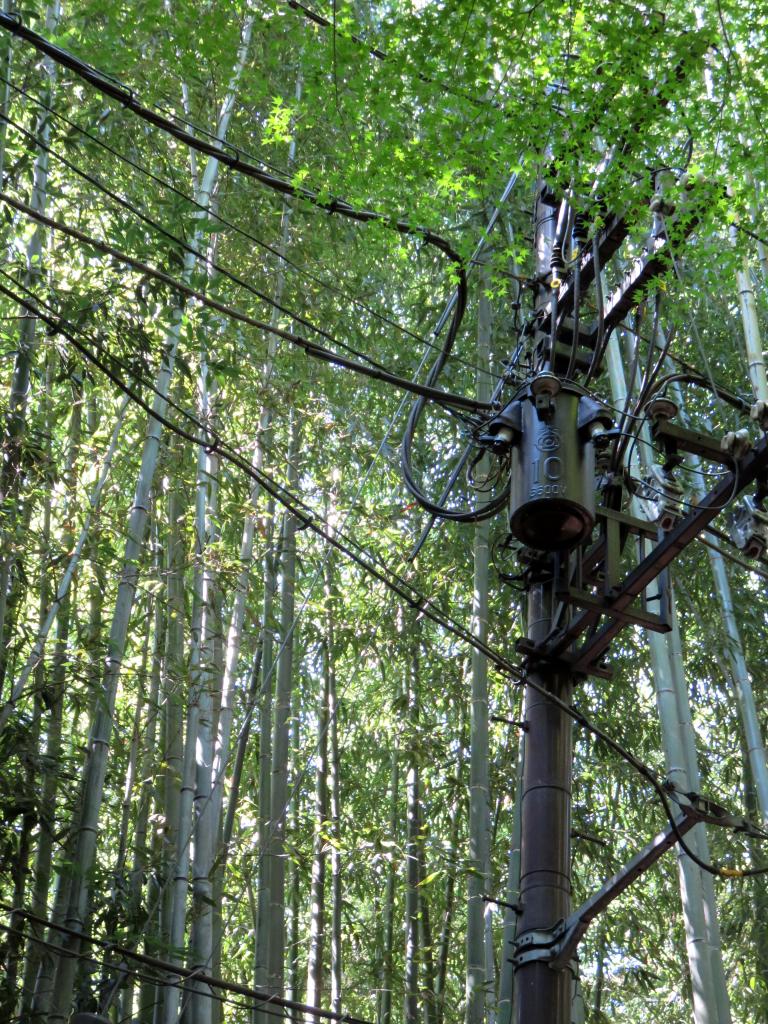 strom im bambuswald